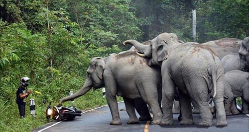 Camera an ninh đã ghi lại cảnh du khách van xin voi rừng tha lỗi