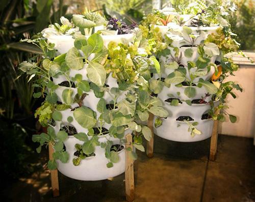 Vườn rau thẳng đứng thích hợp cho các nhà nhỏ