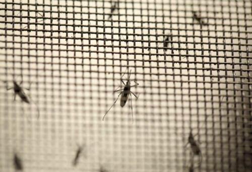 Virus Zika nghi gây bệnh đầu nhỏ nguy hiểm
