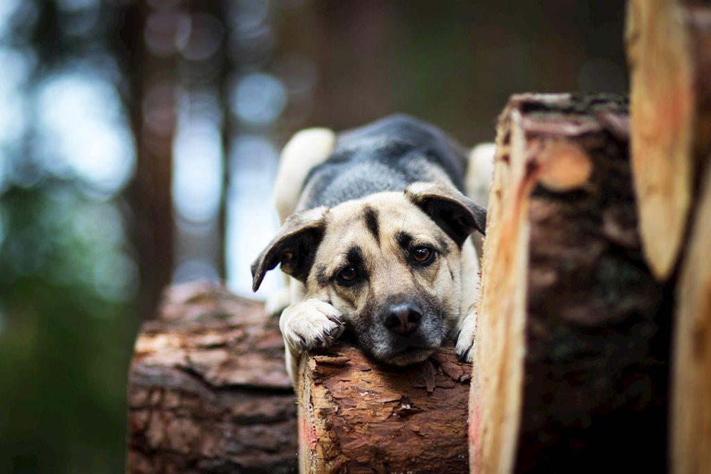 BST ảnh những chú cún đáng yêu nhất