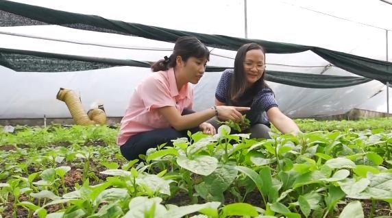 Chị Nguyễn Thị Quỳnh Viên bỏ giảng đường gây dựng giấc mơ