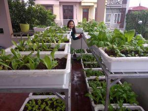 Học cách trồng hàng cân rau mầm của mẹ trẻ 2 con